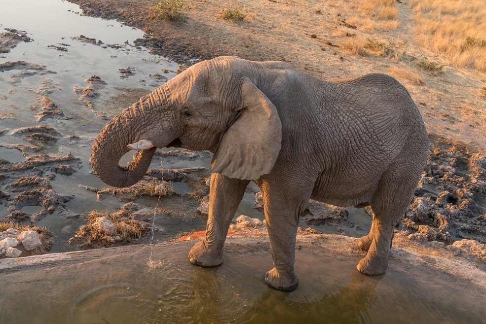 This fun tool translates human words to something elephants will understand