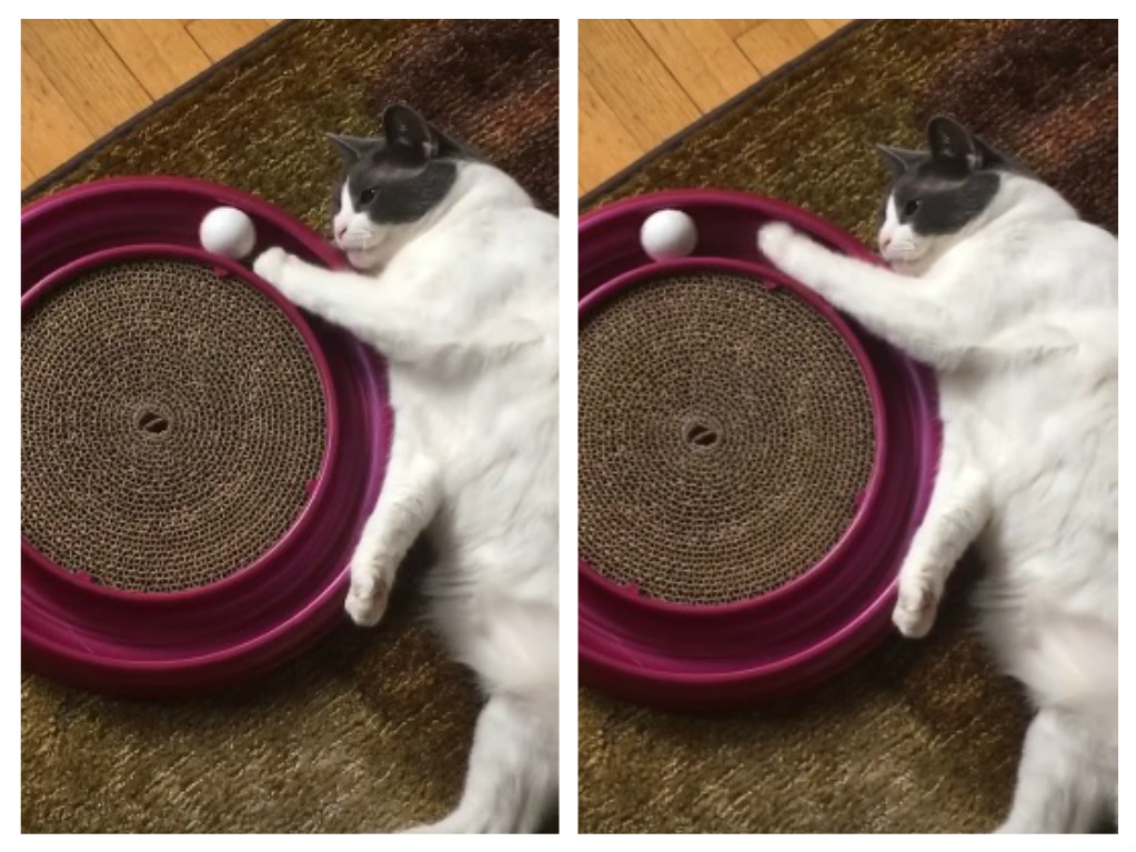 This extremely lazy cat attempting to play with a ball is #weekendgoals