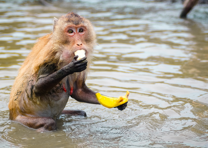 People are fighting about how ripe to eat their bananas, and things are getting ugly
