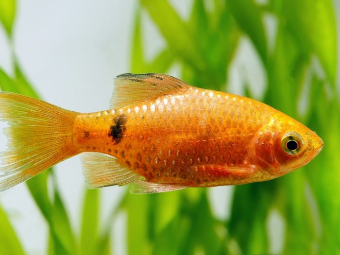 Need a friend? Belgian hotel rents goldfish to lonely guests