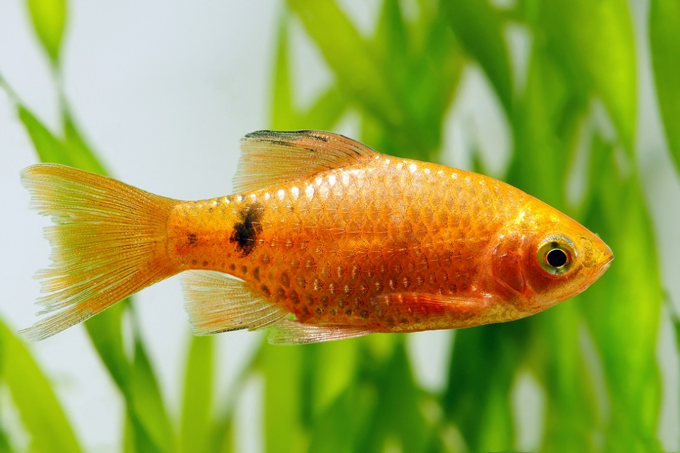 This hotel lets you to rent a goldfish for the night, just in case you're lonely
