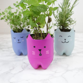 These DIY cat planters are purr-fect for showing off your green paw