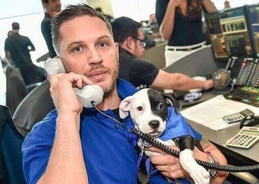 "That ""Tom Hardy Holding Dogs"" Instagram has so many new pics, and you're welcome in advance"