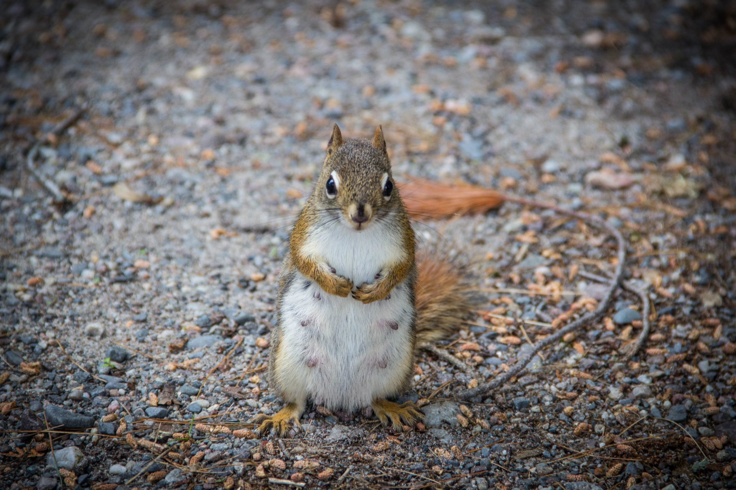 Squirrel hijacks vacation photo Big Ass, feat. the best ass pics, bubble butts images on the