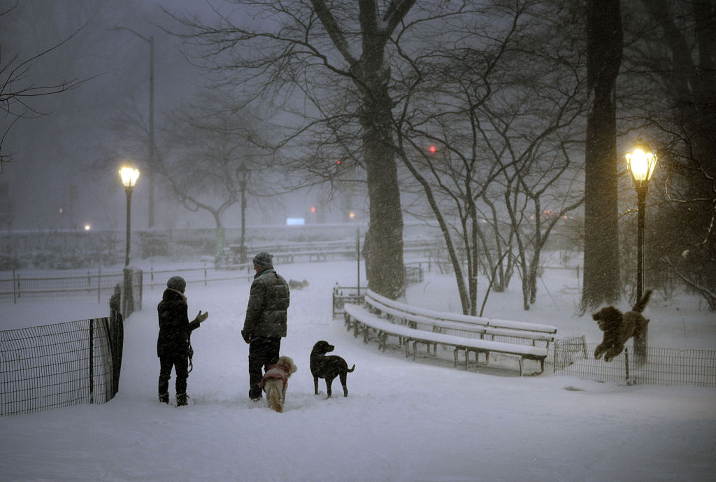 NEW YORK, NY - JANUARY 23: Dogs are walked during heavy snow fall and strong wind gusts in Central Park on January 23, 2016 in New York City. A major Nor'easter is hitting much of the East Coast as forecasts warn of snow falling to well over a foot in some areas. (Photo by Astrid Riecken/Getty Images)