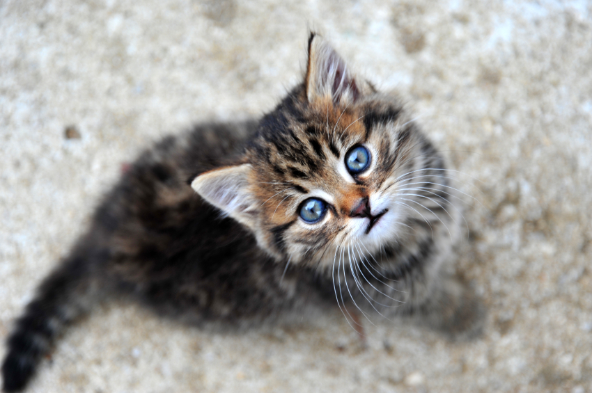 Your cat really is trying to talk with you, and here's why