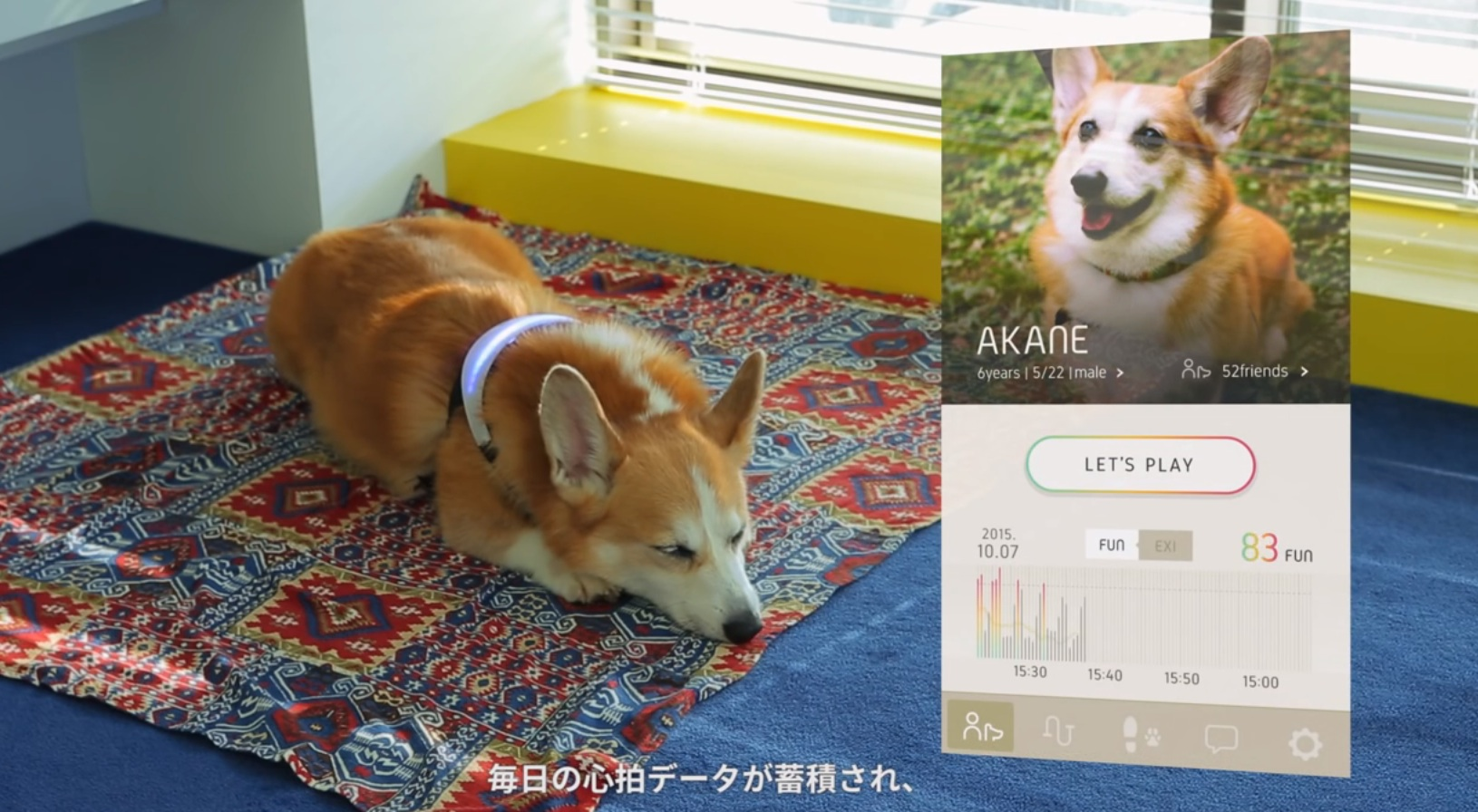 This collar will tell you exactly what your dog is thinking