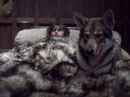 we really need these direwolf deaths to come to a stop on game of thrones. Black Bedroom Furniture Sets. Home Design Ideas