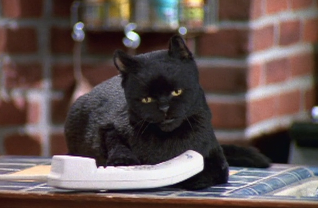 10 times Salem the cat said what we were ~really~ thinking