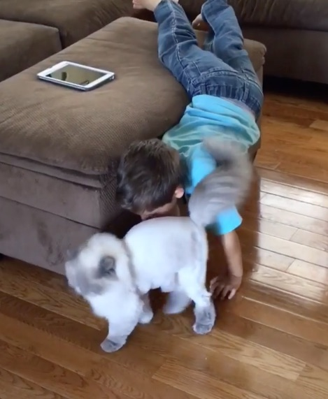 This little boy struggling to get his cat to pay attention to him is adorable!