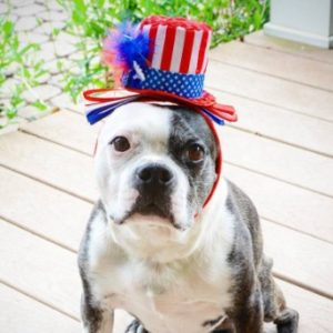 These dogs are totally ready for 4th of July