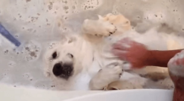 This bath-loving dog is an overload of cuteness