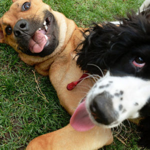 Your dog can now send you selfies during the day, because the future is now