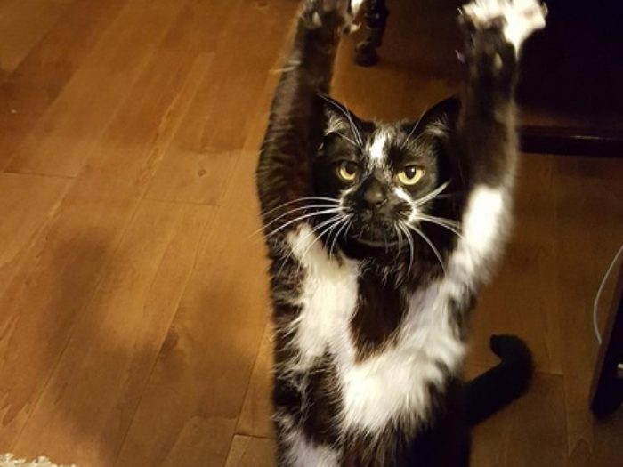 So This Adorable Cat Keeps Putting Its Arms In The Air