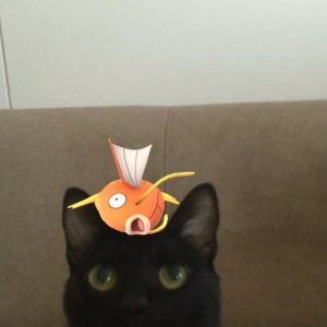 So, it appears that animals can *definitely* see Pokémon and these 12 pets prove it