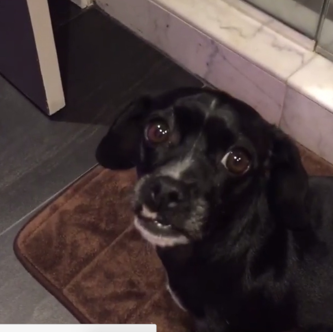Sarah Silverman's dog sneaking into the bathroom is the cutest thing we've seen today