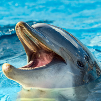 Scientists may have caught dolphins holding an actual conversation and it is fascinating