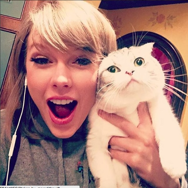 Taylor Swift posted a picture of her famously unamused cat and we cannot stop laughing