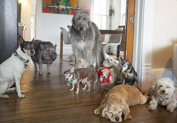This guy adopted a family of senior dogs and other animals to let them live their best years yet