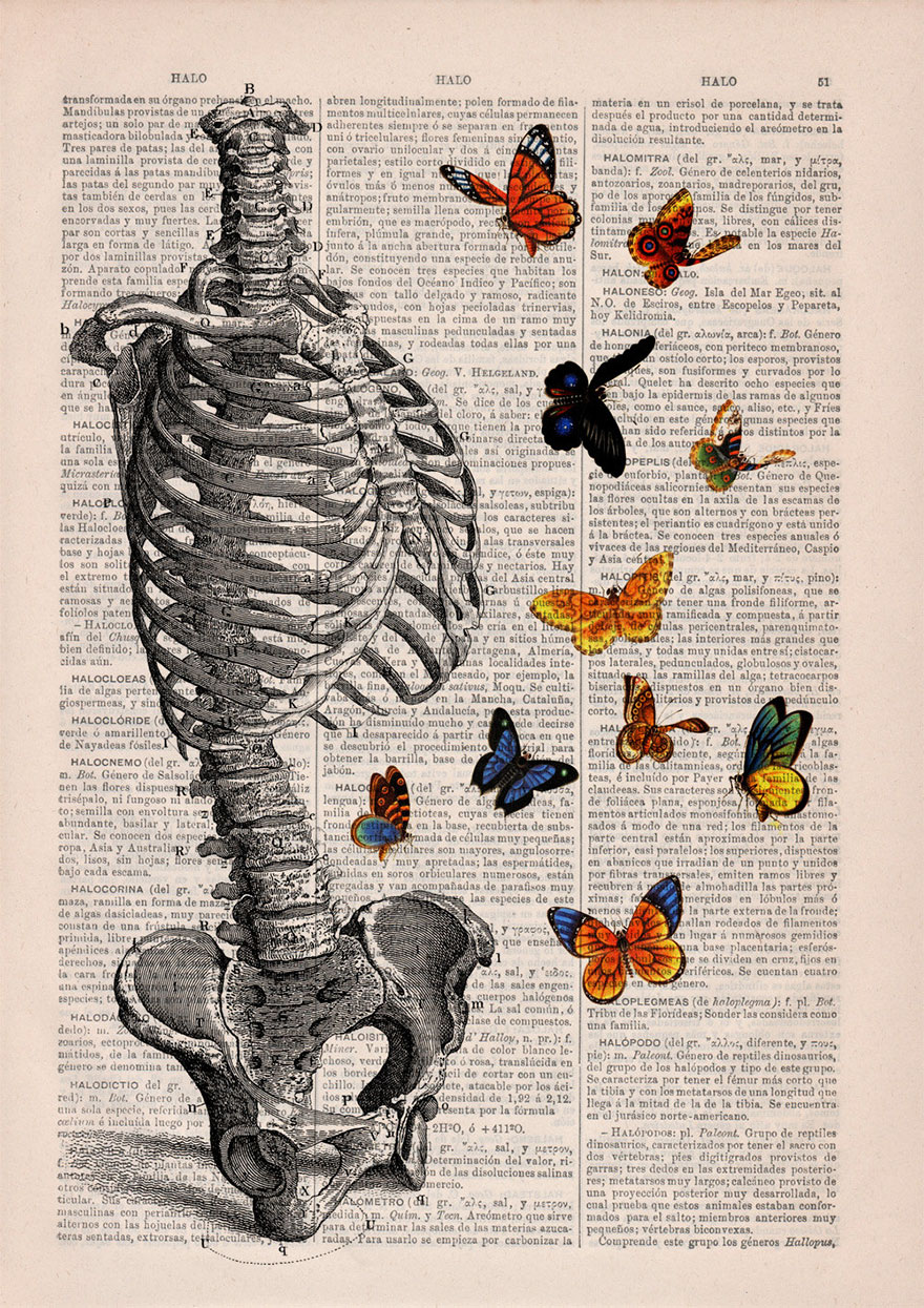 These anatomical drawings on old book pages are so gorgeous, you're going to want to wallpaper your room in them