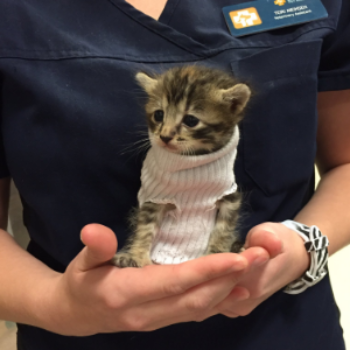 This tiny kitten survived Hurricane Matthew and also wore the cutest turtleneck sweater