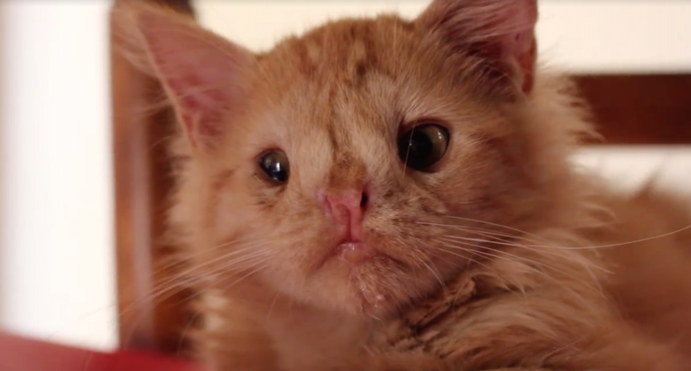 """This cat has been called """"too ugly"""" to be loved, but we couldn't disagree more"""