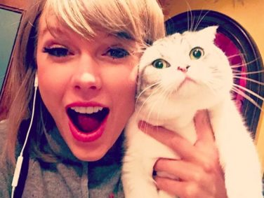 "15 ""Stumble home to my cats"" Taylor Swift tweets we all need in our lives right meow"