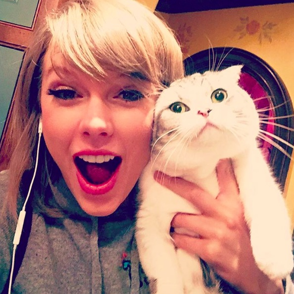 """15 """"Stumble home to my cats"""" Taylor Swift memes we all need in our lives right meow"""