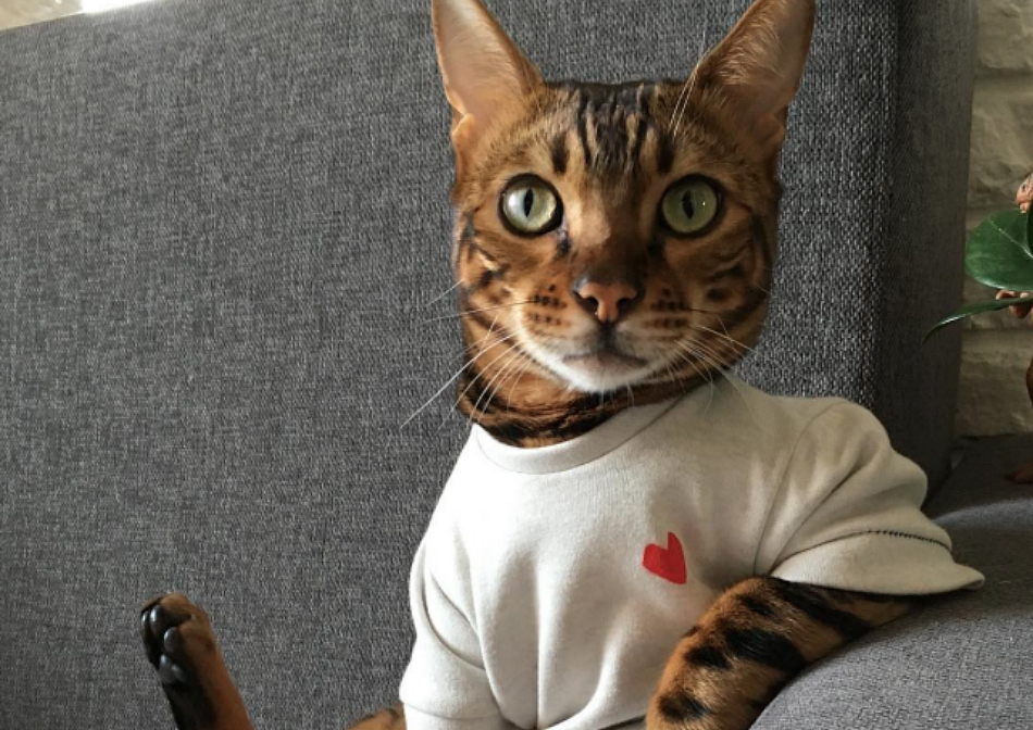 This cat wears clothes on the reg, and it's bizarrely stylish in the best way