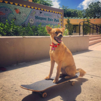 Here are literally just 12 videos of dogs riding skateboards, which is obviously something you need