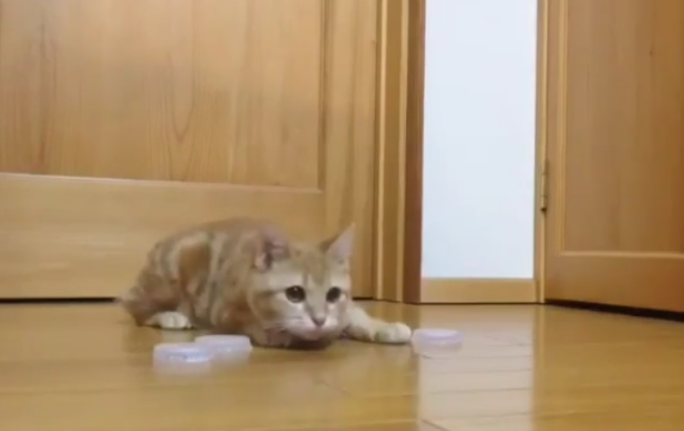 We're so jealous of this cat's incredible air hockey skills