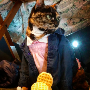 Attn: humans — cat cosplay is an adorable thing you didn't know you needed