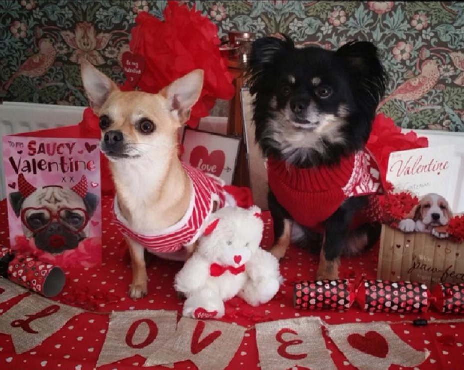 13 valentine 39 s day dogs that would probably make better - Valentines day pictures with puppies ...