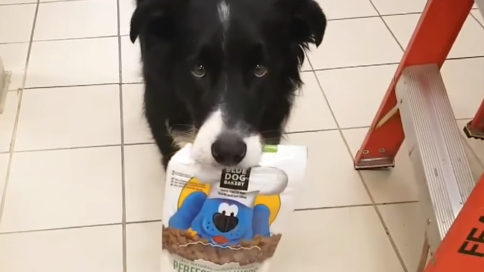 This dog paying for his own groceries is the perfect cure for your stressful week