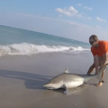 This guy saved a shark caught on a fishing line, and we are applauding this incredible act of bravery