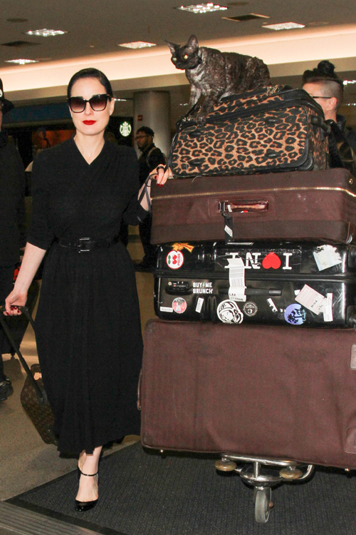 Dita Von Teese has the world's chillest cat who rides on ...