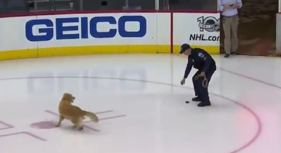 This dog chasing a hockey puck at an ice rink is an instant mood-booster