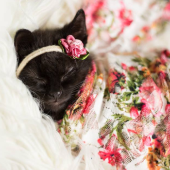 This woman gave us the gift of a newborn photoshoot — with a kitten