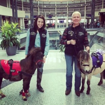 These miniature therapy horses will help you keep chill at the airport