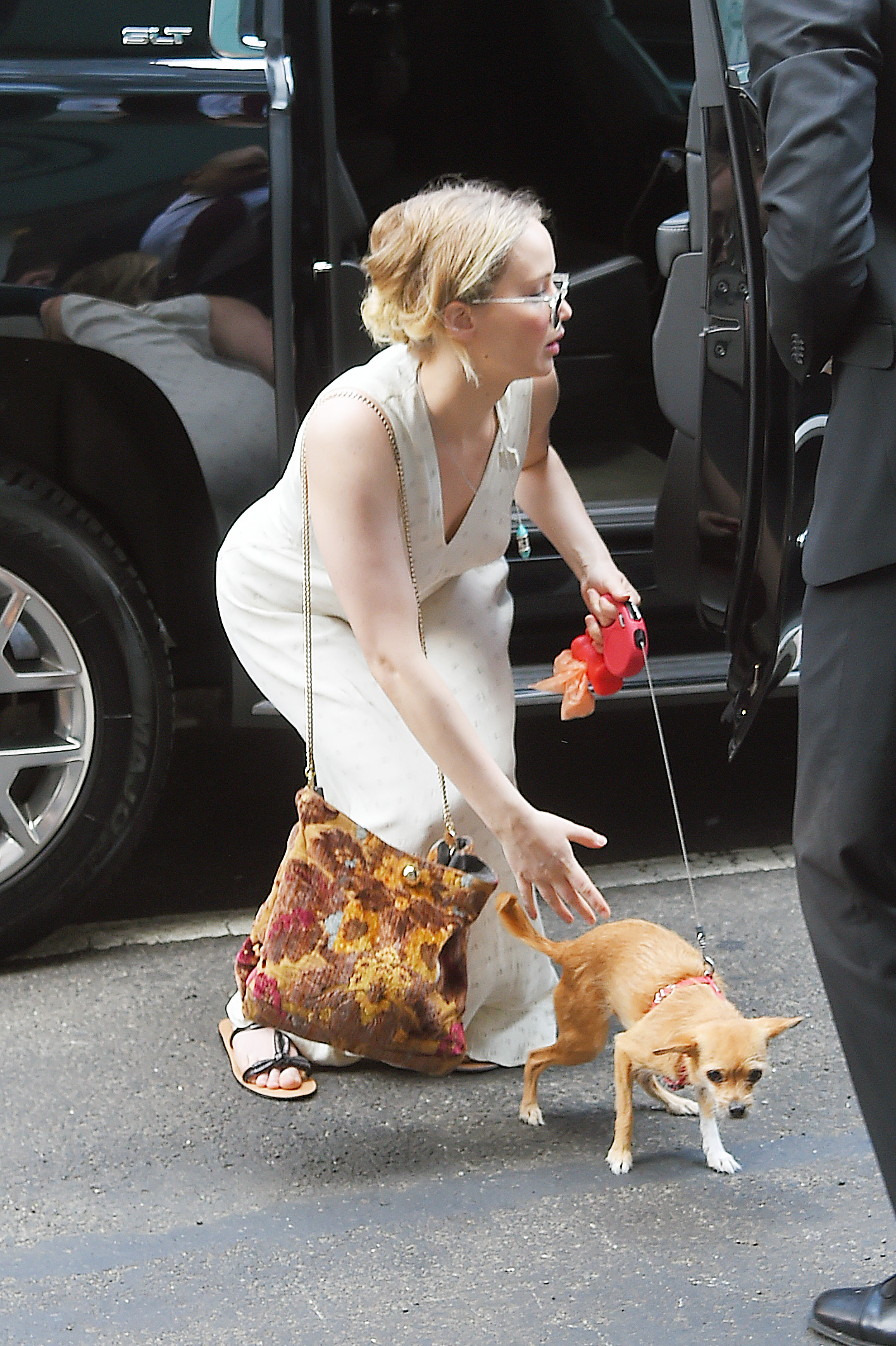 Dog Car Harness >> Jennifer Lawrence's dog is all of us while out on a walk ...