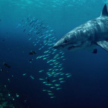 5 things we can't wait to see during Shark Week