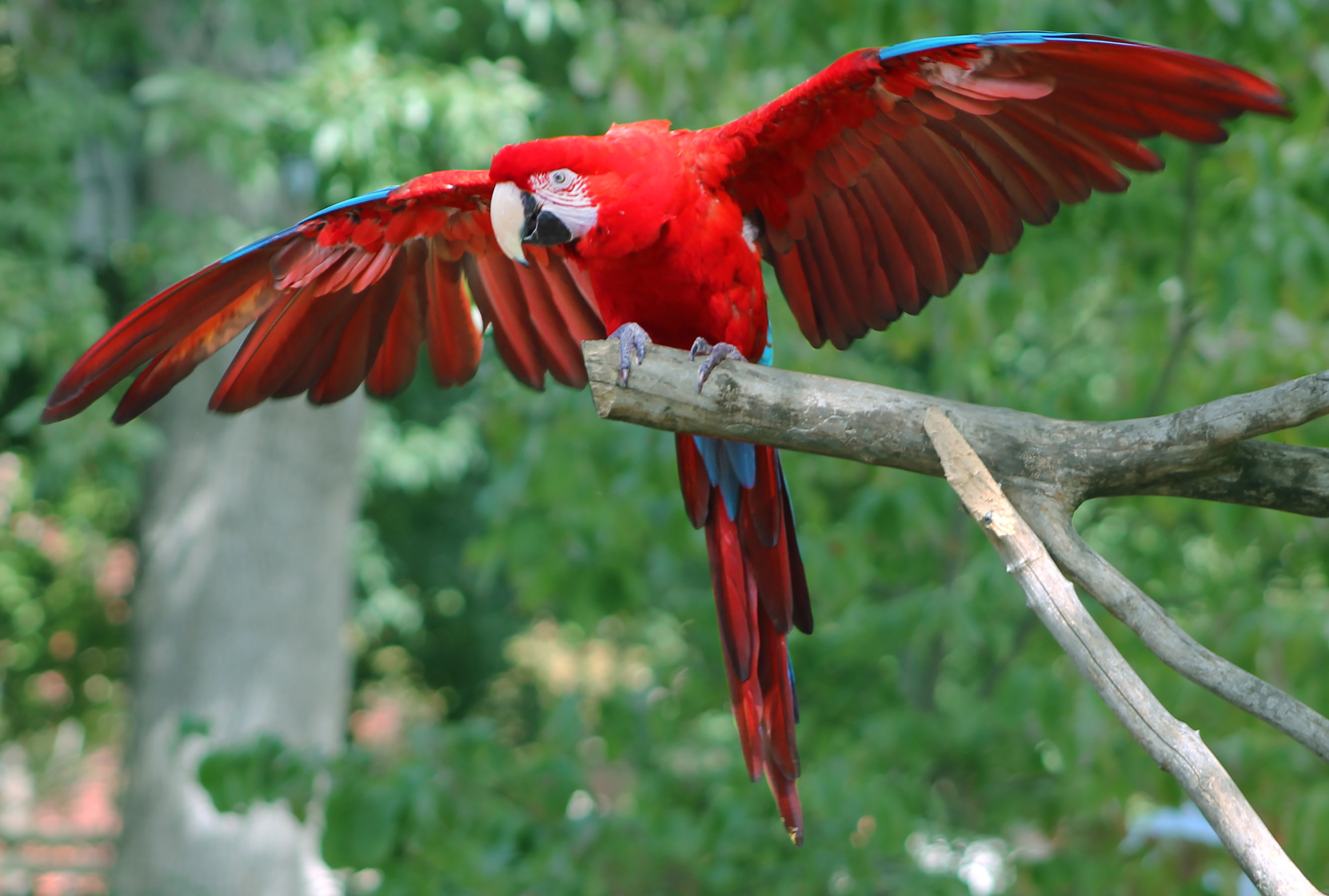 here are 9 parrots i think should be cast as iago in