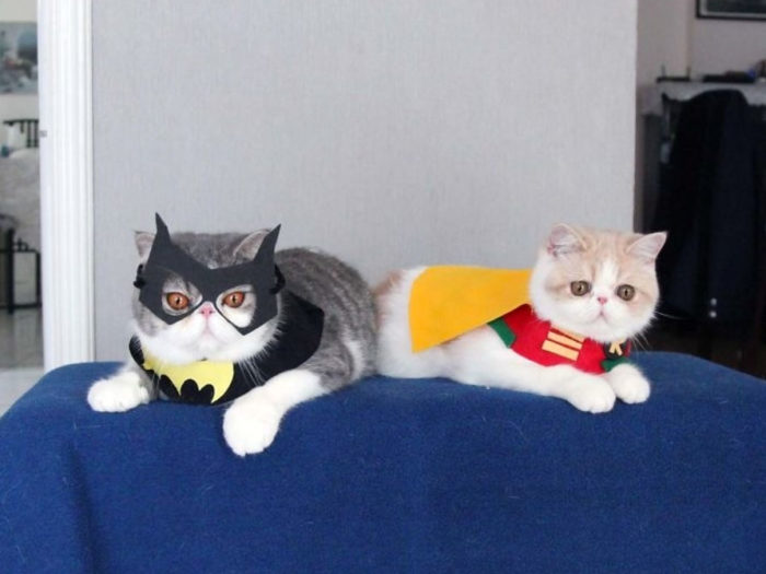 Find great deals on eBay for halloween costumes for cats. Shop with confidence.
