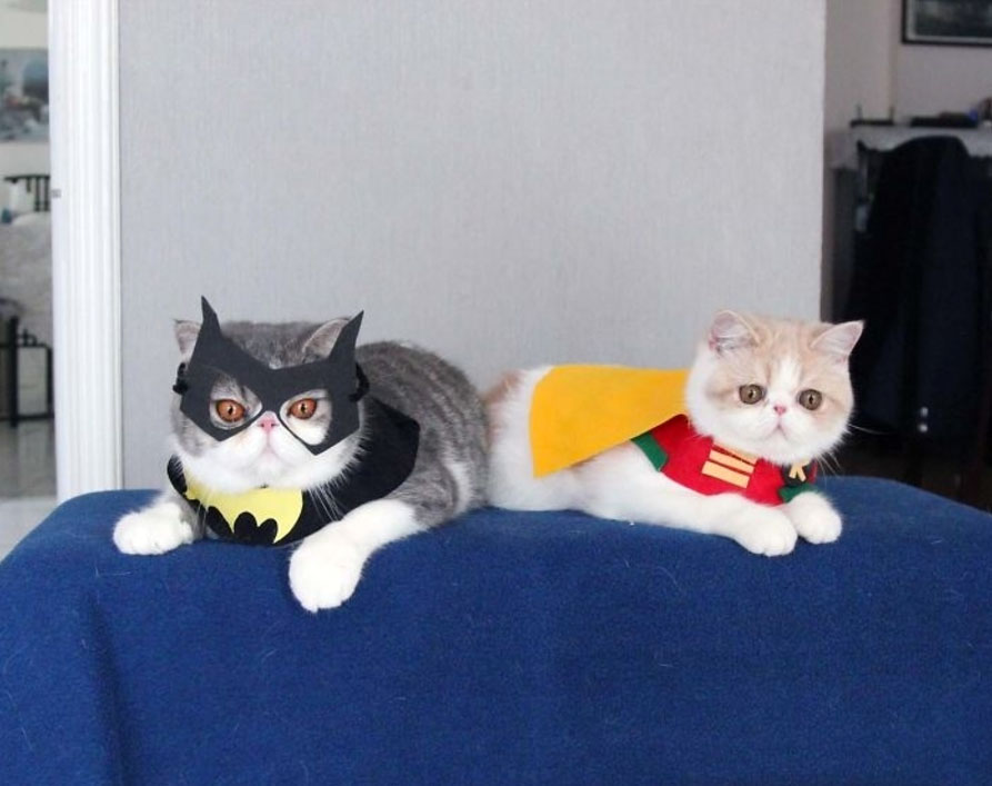 13 Ridiculously Cute Cat Halloween Costumes Hellogiggles