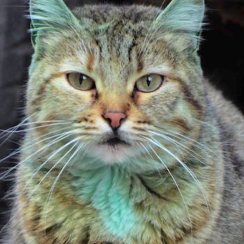 There's an emerald green cat running around this Bulgarian town, and you just have to see it