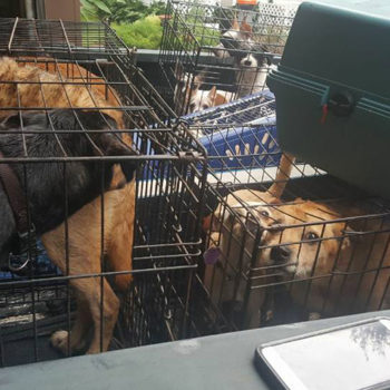 This story of good Samaritans rescuing 21 dogs from Hurricane Harvey flood waters will warm your heart