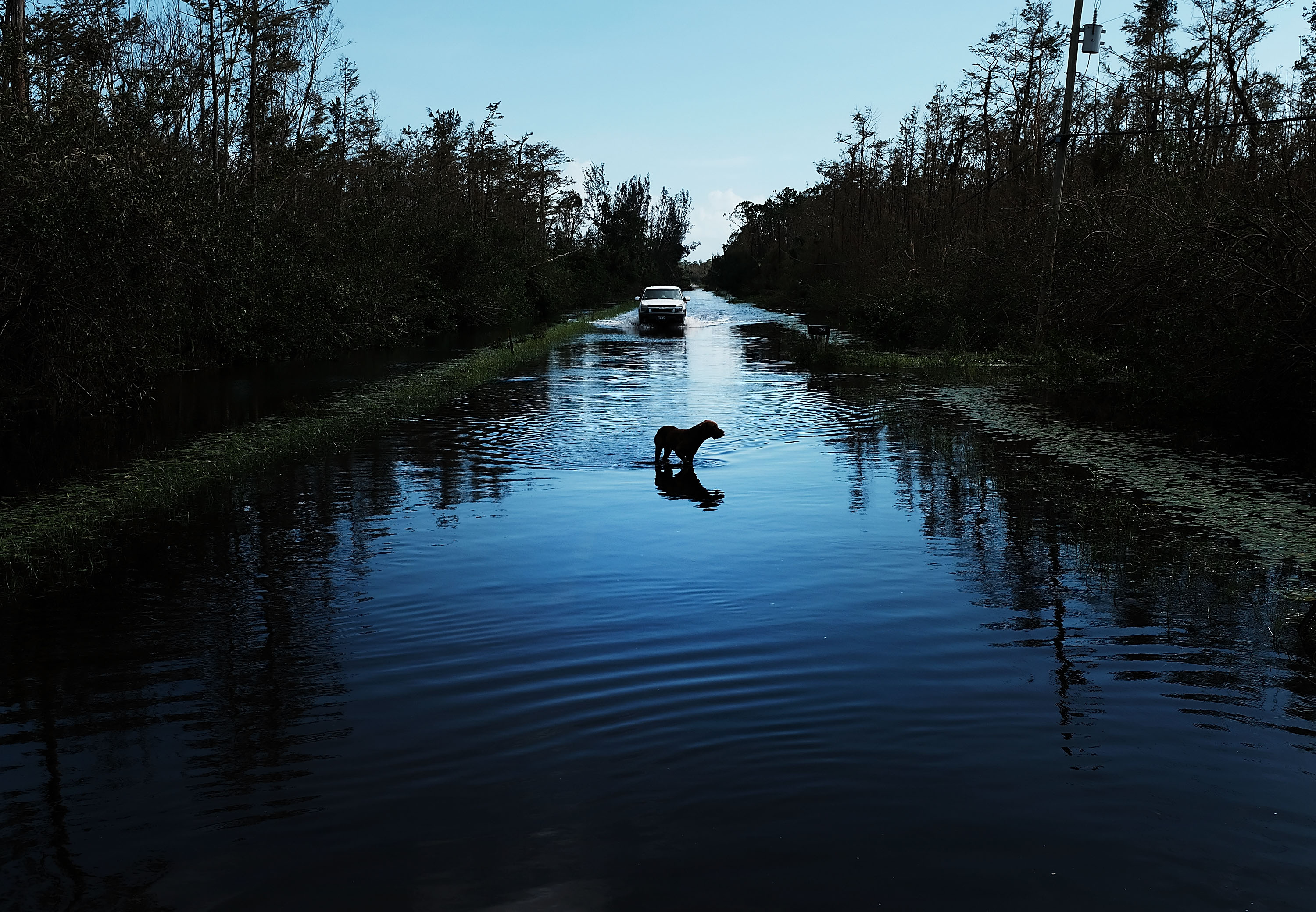 Image of a dog after Hurricane Irma hit Naples