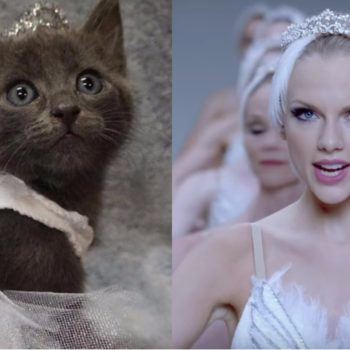 "These pictures of kittens dressed as Taylor Swift in her ""Look What You Made Me Do"" video will melt your heart"