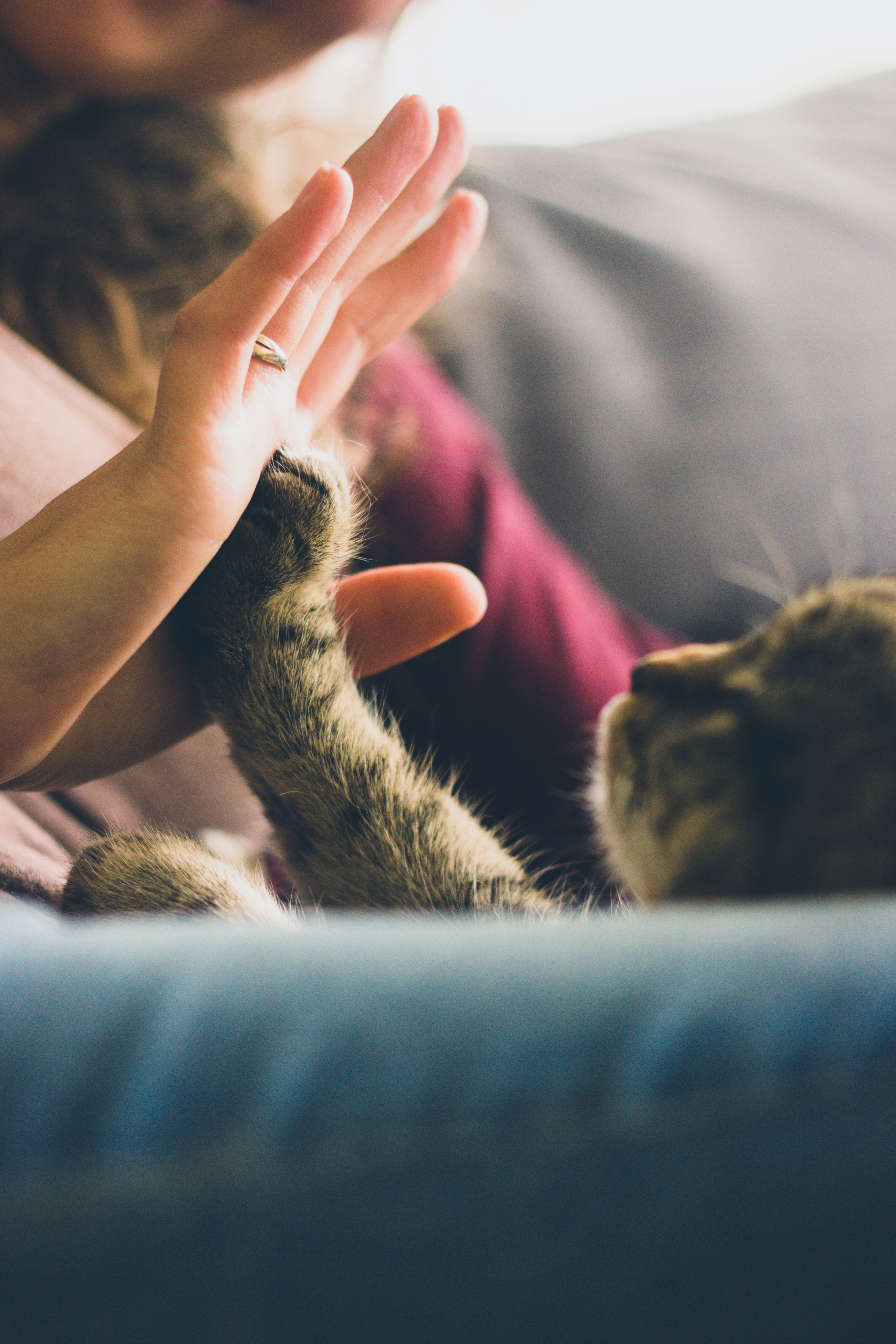 7 facts that everyone with ailurophobia wants you to know