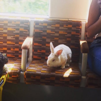 A bunny has been riding the bus in London because he has somewhere to be just like everyone else, okay?